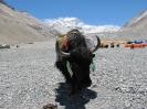 Everest 2010_75