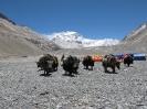 Everest 2010_76